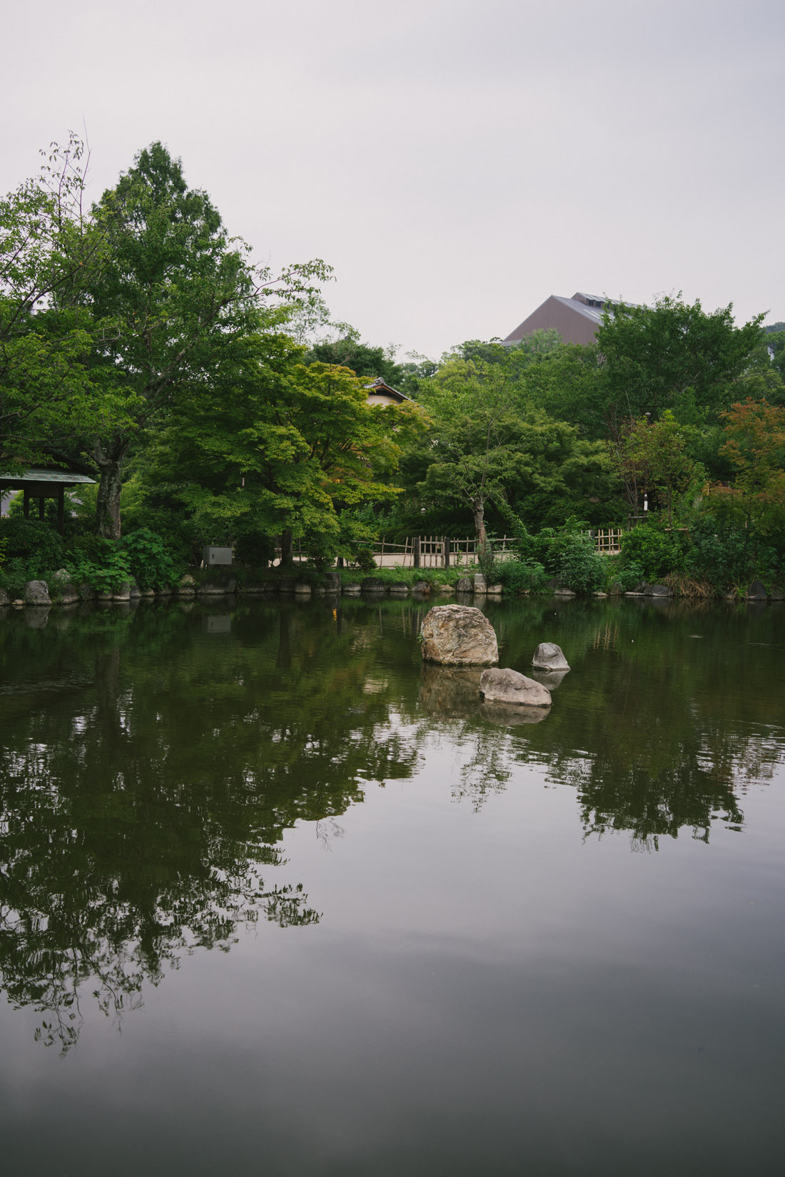 Pond in Maruyama park with many fish, a couple of ducks and a pair of turtles.