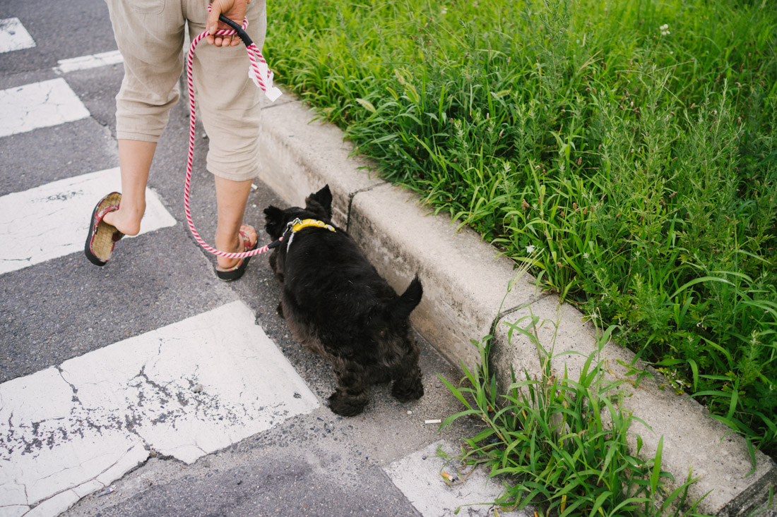 There are definitely more doggies out with their owners in Kyoto than in Tokyo, probably because houses are bigger and it's just easier to walk them around.