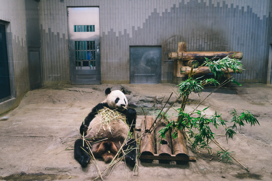 Happy panda only needs bamboo to stay happy.