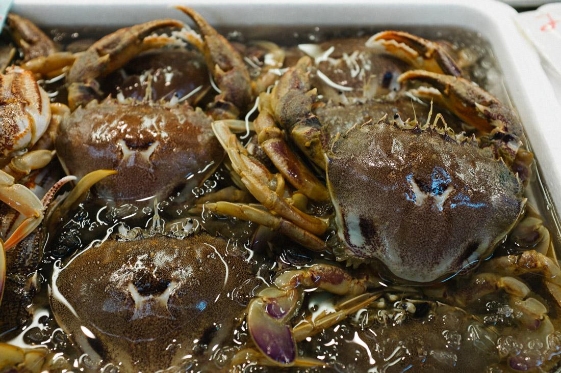 Japanese crabs.